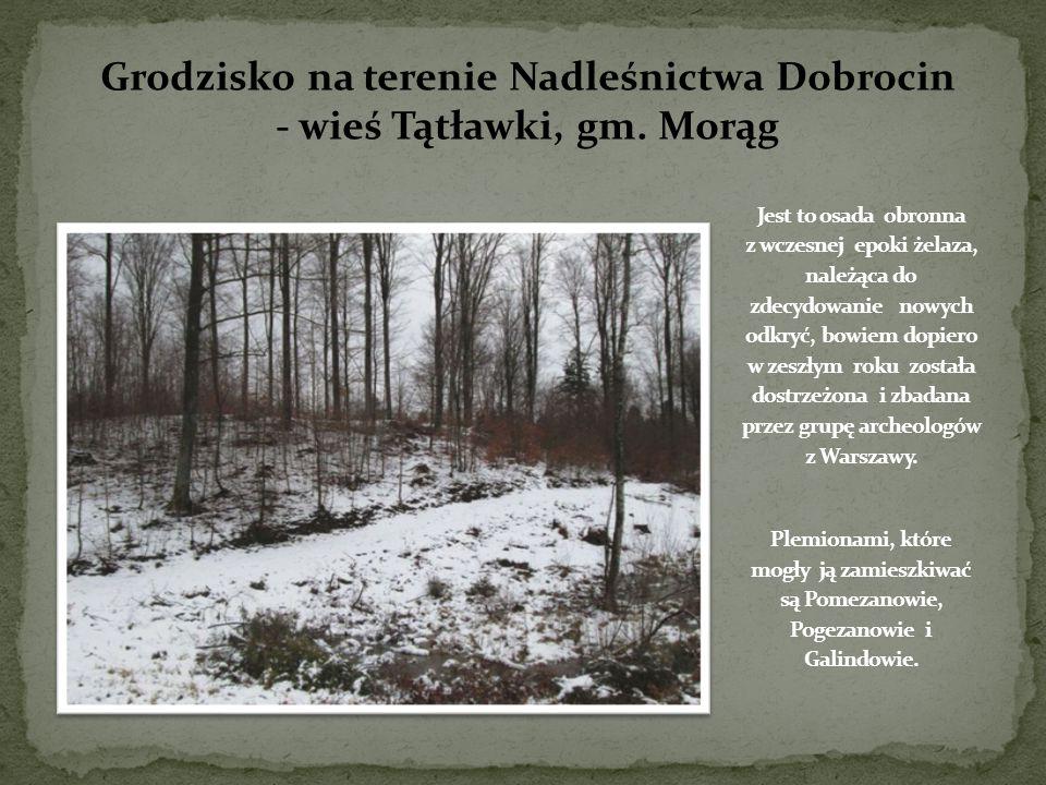 Fotografia przedstawia mapę po procesie zdjęcia drzewostanu w specjalnym programie.