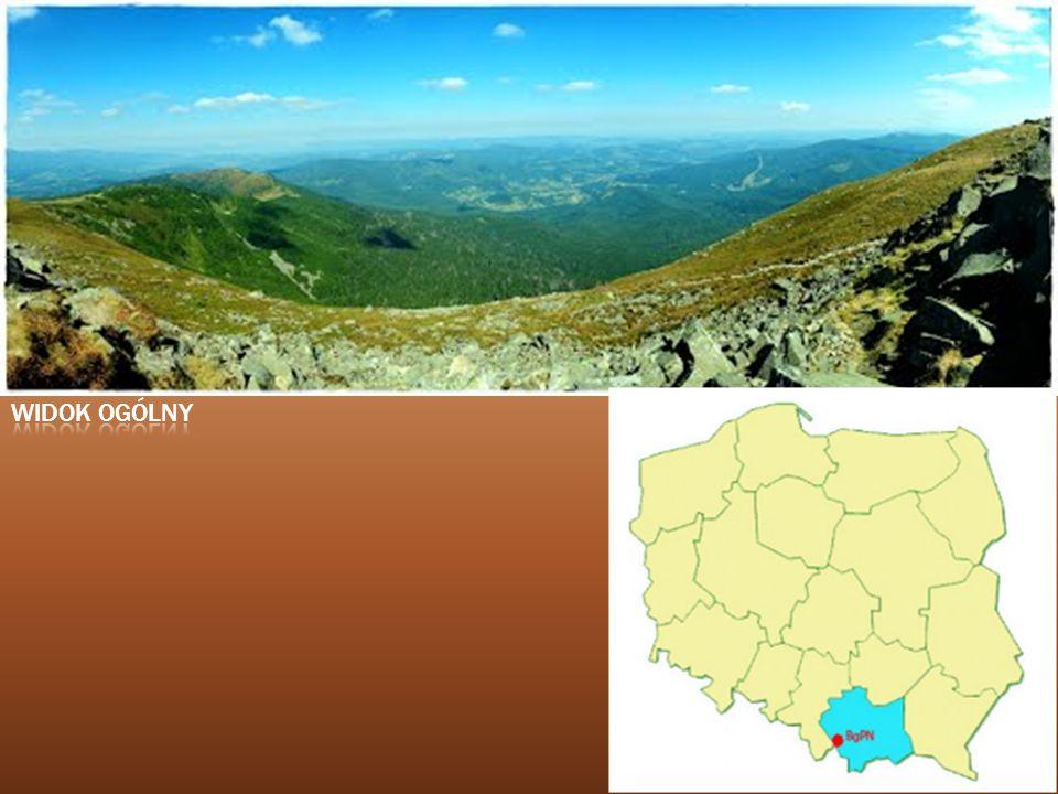 Roślinność Flora Babiej Góry była badana już 100 lat temu.Stwierdzono występowanie ponad 600 gatunków roślin naczyniowych.