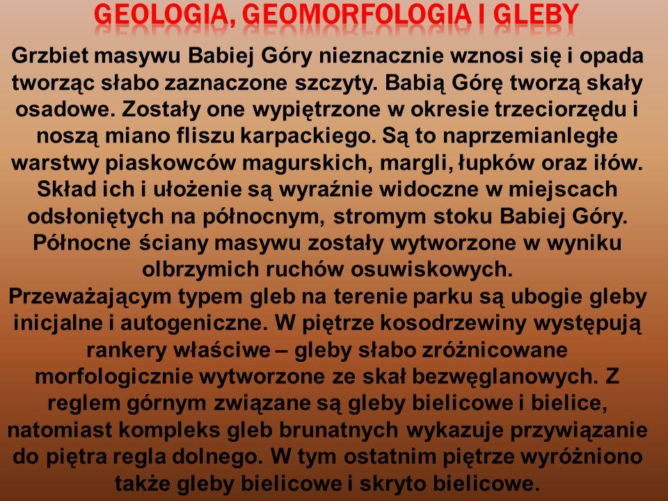 Śledziennica skrętolistnaSkrzyp błotny Modrzyk górski