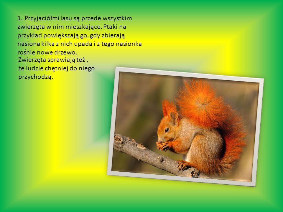 1. Przyjaciółmi lasu są przede wszystkim zwierzęta w nim mieszkające.