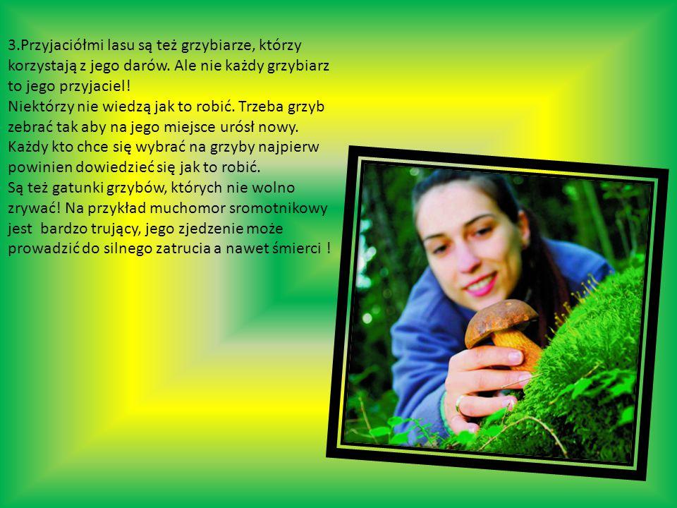 3.Przyjaciółmi lasu są też grzybiarze, którzy korzystają z jego darów.