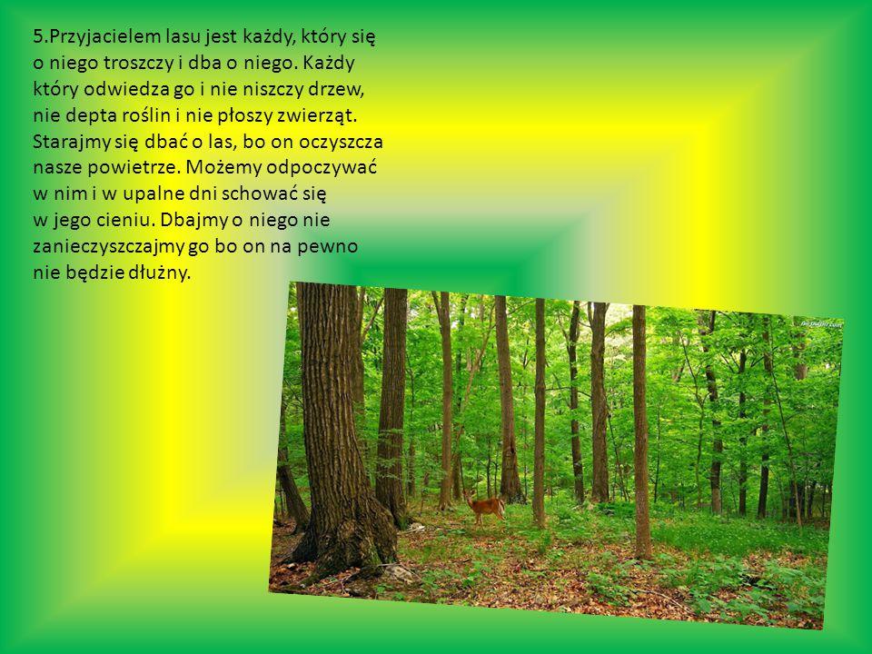 5.Przyjacielem lasu jest każdy, który się o niego troszczy i dba o niego.