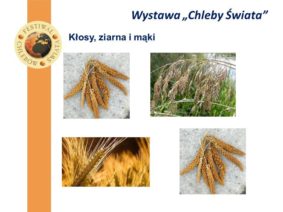 """Wystawa """"Chleby Świata"""" Kłosy, ziarna i mąki"""