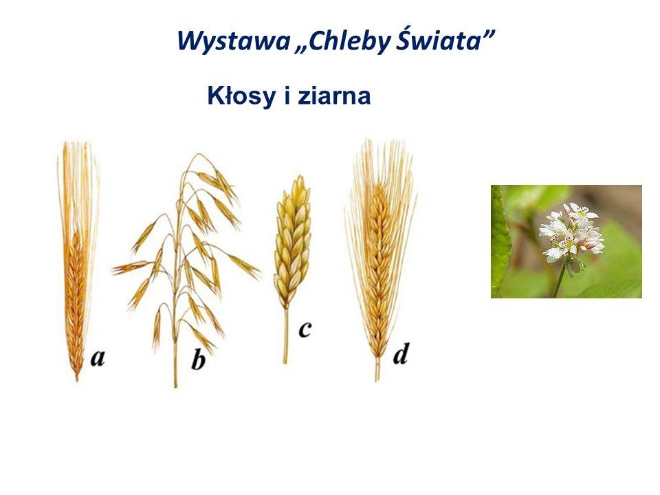 """Wystawa """"Chleby Świata"""" Kłosy i ziarna"""
