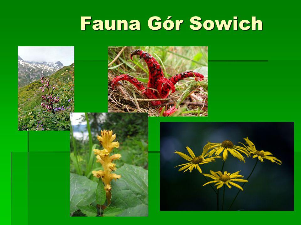 Fauna Gór Sowich Fauna Gór Sowich