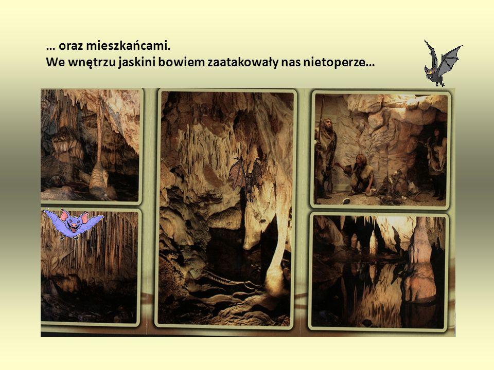 kolumnami naciekowymi, perłami jaskiniowymi, jeziorkami i polami ryżowymi … Podkielecka jaskinia zachwyciła nas stalaktytami, stalagmitami,
