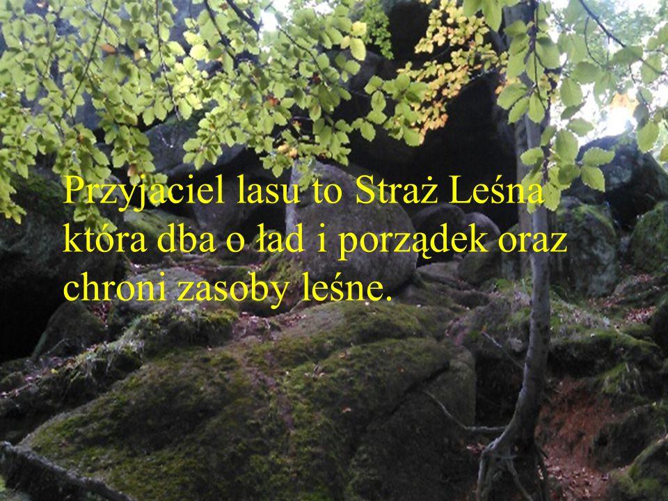 Przyjaciel lasu to Straż Leśna która dba o ład i porządek oraz chroni zasoby leśne.