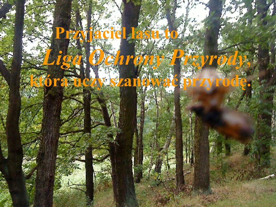 Przyjaciel lasu to L iga O chrony P rzyrody, która uczy szanować przyrodę.