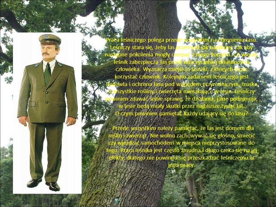 Praca leśniczego polega przede wszystkim na chronieniu lasu.