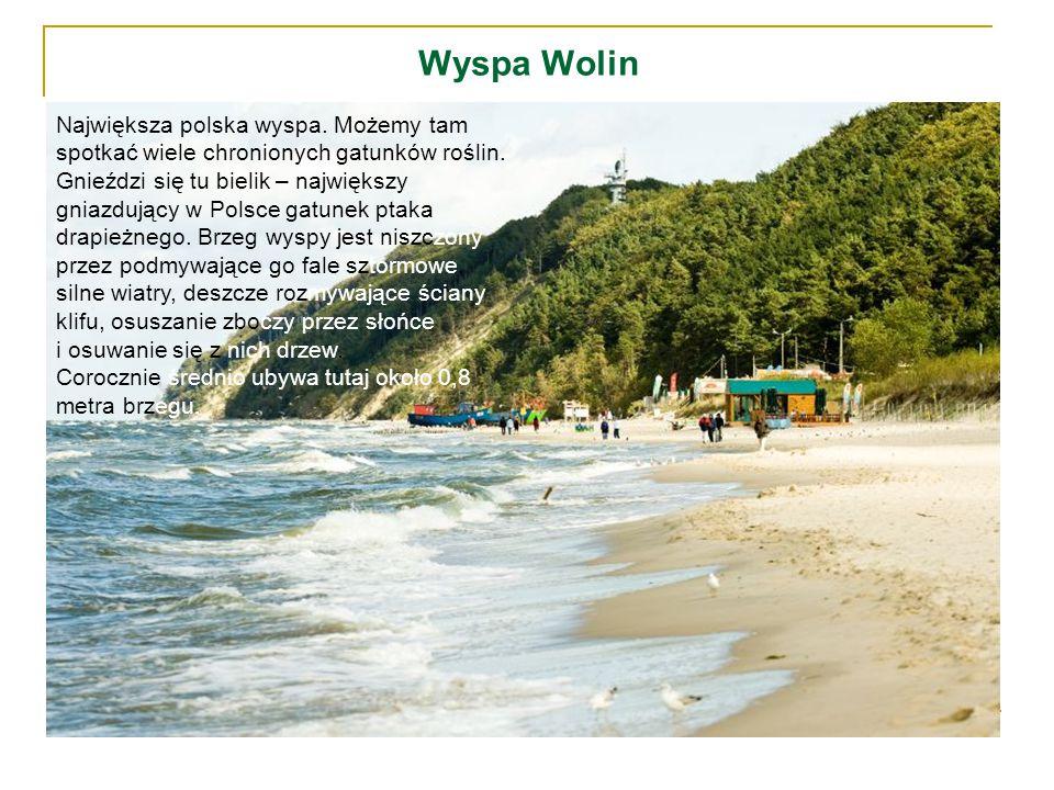 Wyspa Wolin Największa polska wyspa. Możemy tam spotkać wiele chronionych gatunków roślin. Gnieździ się tu bielik – największy gniazdujący w Polsce ga