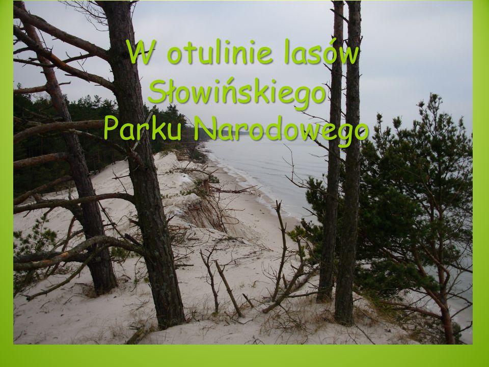 W otulinie lasów Słowińskiego Parku Narodowego