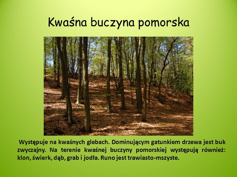 Kwaśna buczyna pomorska Występuje na kwaśnych glebach. Dominującym gatunkiem drzewa jest buk zwyczajny. Na terenie kwaśnej buczyny pomorskiej występuj