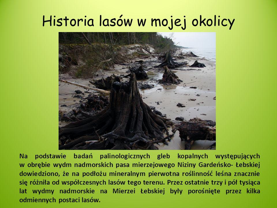 Historia lasów w mojej okolicy Na podstawie badań palinologicznych gleb kopalnych występujących w obrębie wydm nadmorskich pasa mierzejowego Niziny Ga