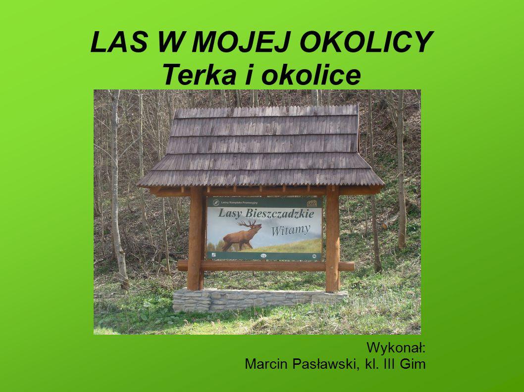 LAS W MOJEJ OKOLICY Terka i okolice Wykonał: Marcin Pasławski, kl. III Gim