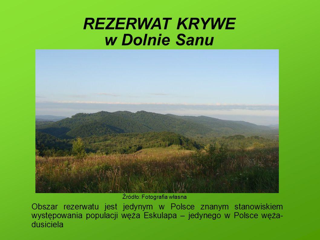 REZERWAT KRYWE w Dolnie Sanu Obszar rezerwatu jest jedynym w Polsce znanym stanowiskiem występowania populacji węża Eskulapa – jedynego w Polsce węża- dusiciela Źródło: Fotografia własna