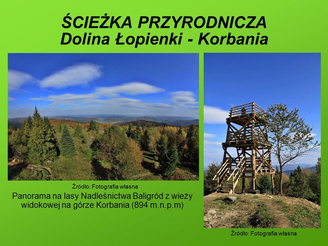ŚCIEŻKA PRZYRODNICZA Dolina Łopienki - Korbania Źródło: Fotografia własna Panorama na lasy Nadleśnictwa Baligród z wieży widokowej na górze Korbania (894 m.n.p.m) Źródło: Fotografia własna