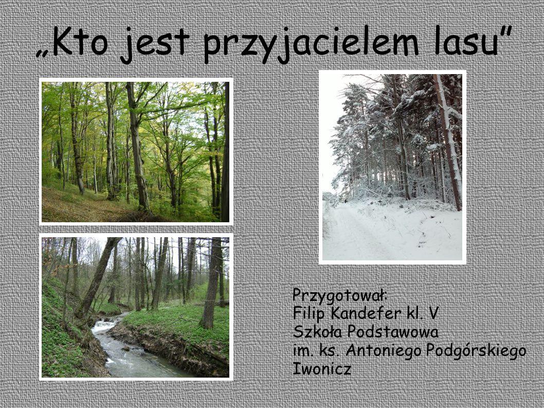 """""""Kto jest przyjacielem lasu Przygotował: Filip Kandefer kl."""