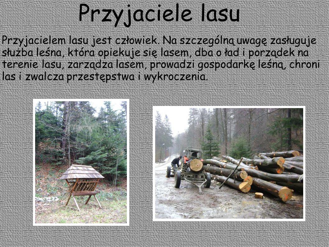 Przyjaciele lasu Przyjacielem lasu jest człowiek. Na szczególną uwagę zasługuje służba leśna, która opiekuje się lasem, dba o ład i porządek na tereni