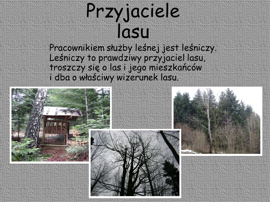 Przyjaciele lasu Leśniczy opiekuje się lasem przez cały rok.