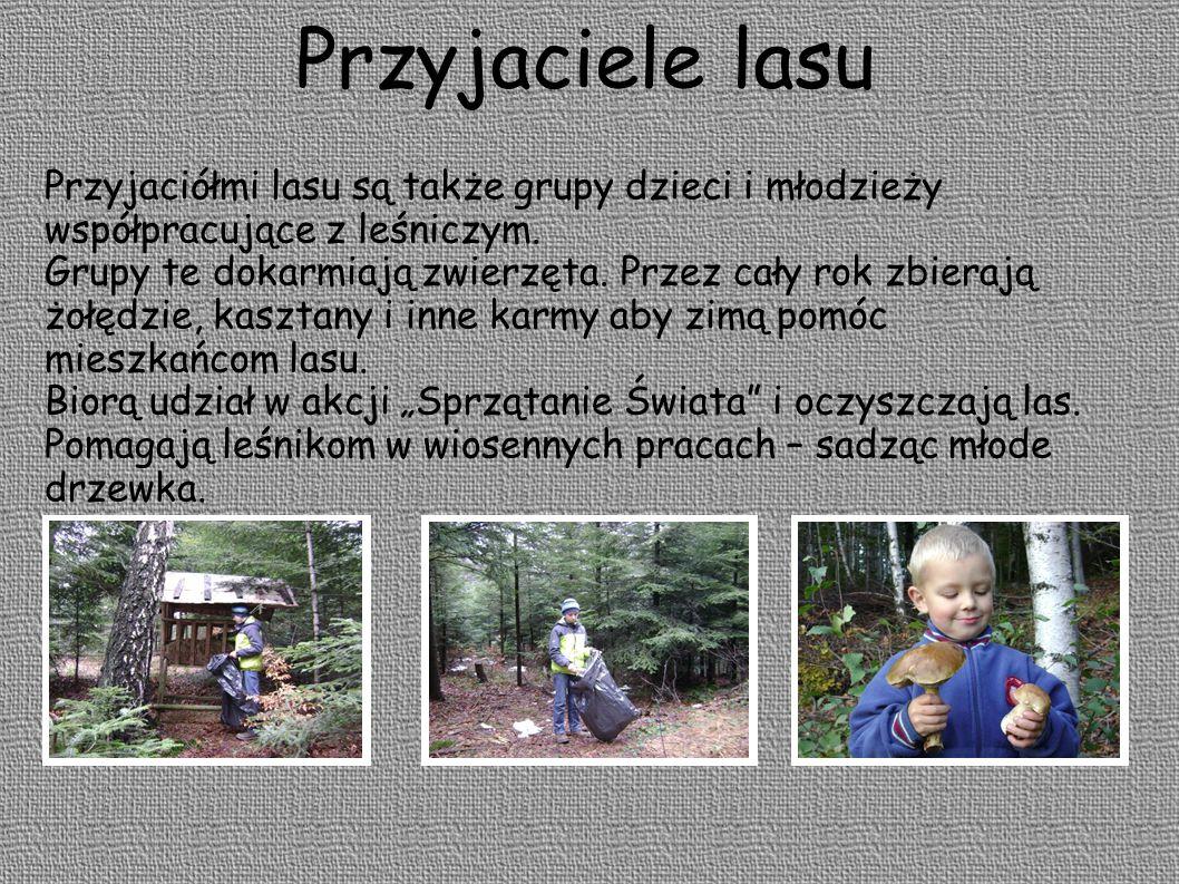 Przyjaciele lasu Przyjaciółmi lasu są także grupy dzieci i młodzieży współpracujące z leśniczym. Grupy te dokarmiają zwierzęta. Przez cały rok zbieraj