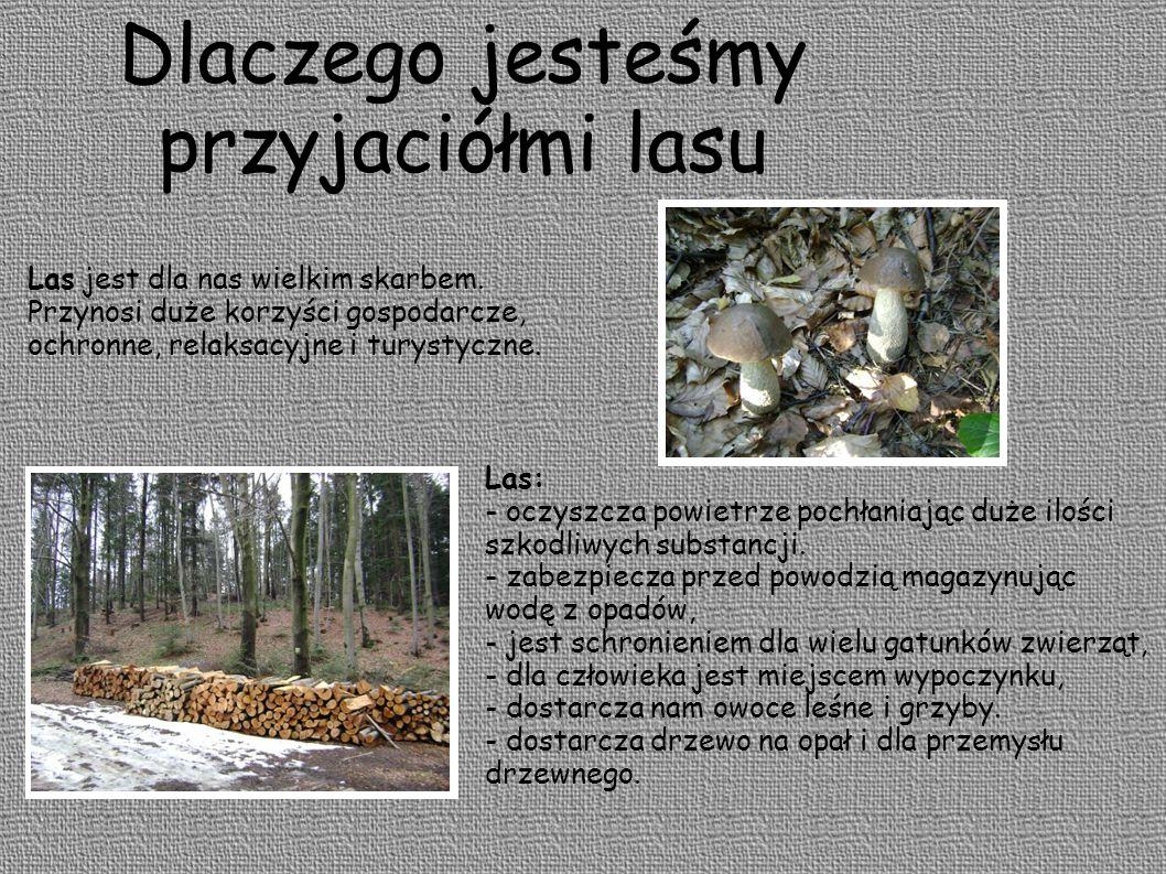 Dlaczego jesteśmy przyjaciółmi lasu Las jest dla nas wielkim skarbem.