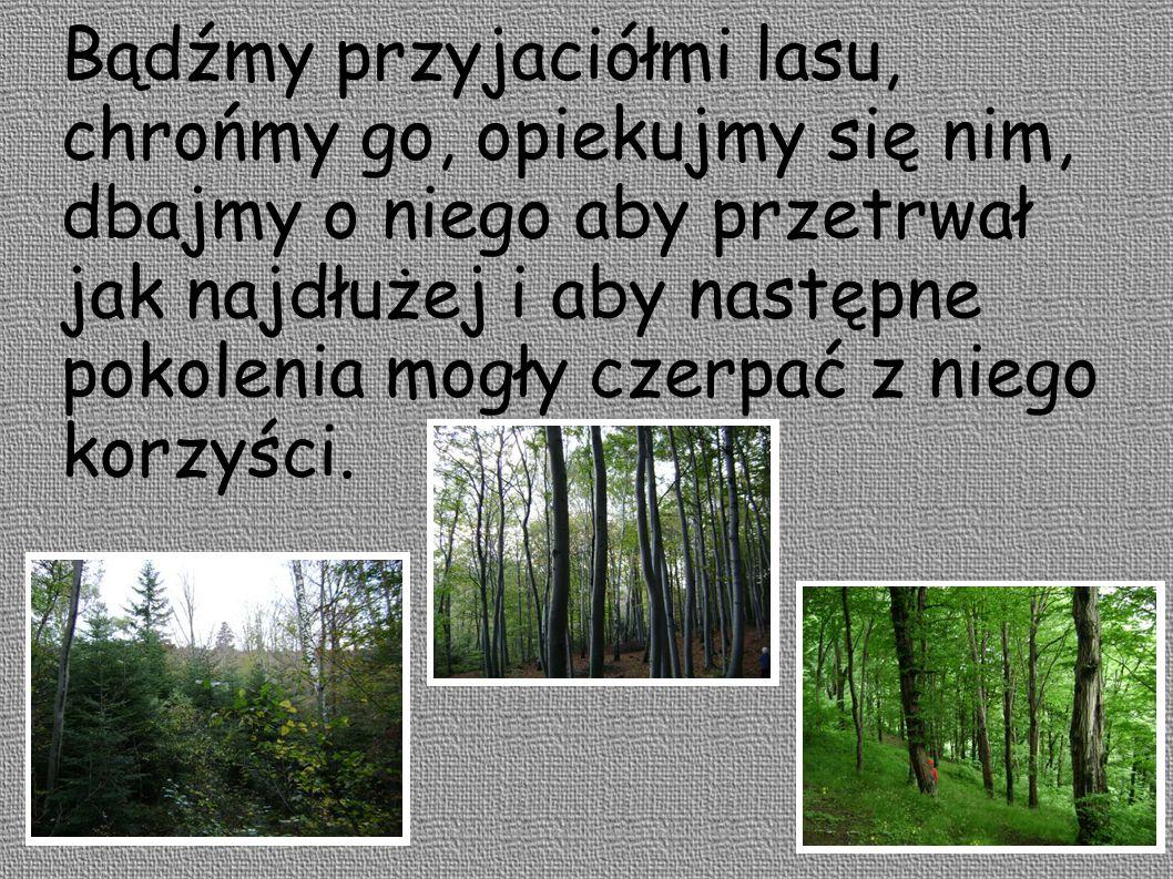 Bądźmy przyjaciółmi lasu, chrońmy go, opiekujmy się nim, dbajmy o niego aby przetrwał jak najdłużej i aby następne pokolenia mogły czerpać z niego kor
