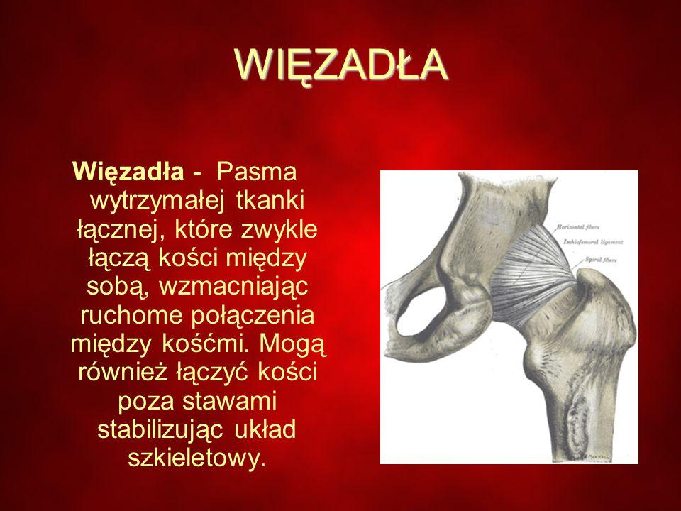 WIĘZADŁA Więzadła - Pasma wytrzymałej tkanki łącznej, które zwykle łączą kości między sobą, wzmacniając ruchome połączenia między kośćmi.