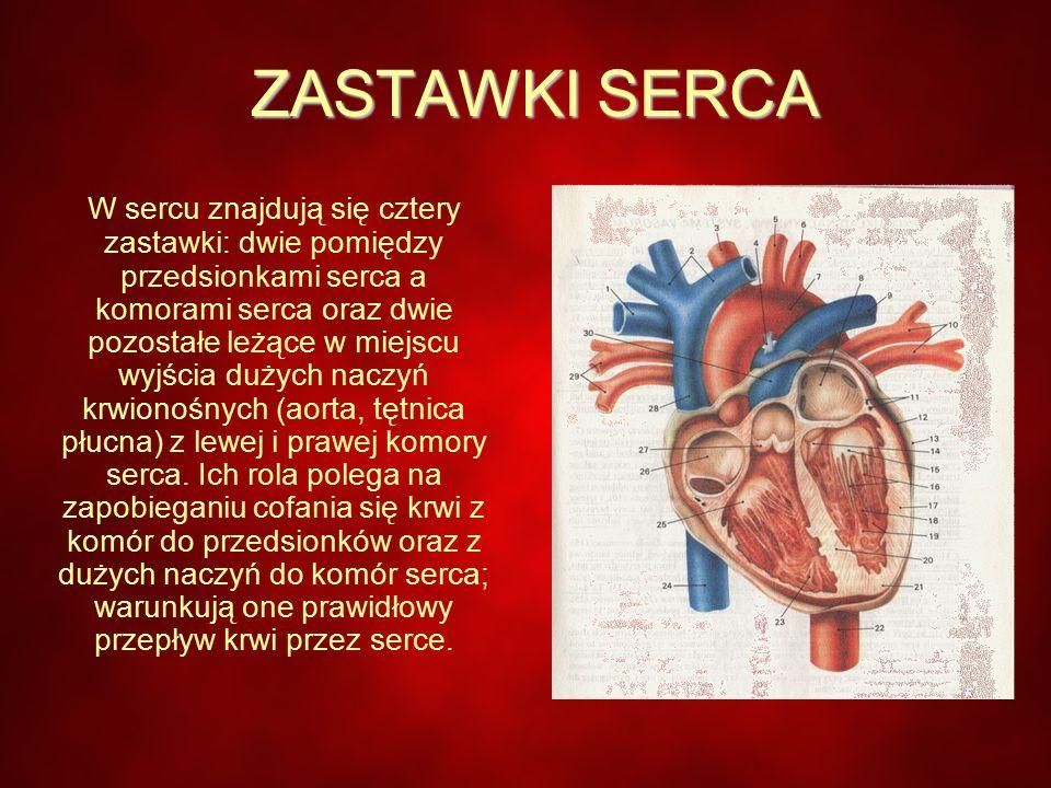 ZASTAWKI SERCA W sercu znajdują się cztery zastawki: dwie pomiędzy przedsionkami serca a komorami serca oraz dwie pozostałe leżące w miejscu wyjścia dużych naczyń krwionośnych (aorta, tętnica płucna) z lewej i prawej komory serca.