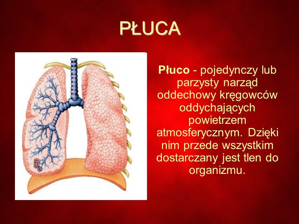 PŁUCA Płuco - pojedynczy lub parzysty narząd oddechowy kręgowców oddychających powietrzem atmosferycznym.