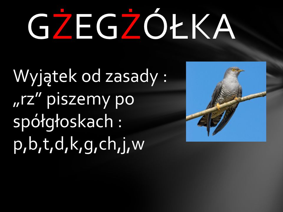 G_eg_ółka rz ż