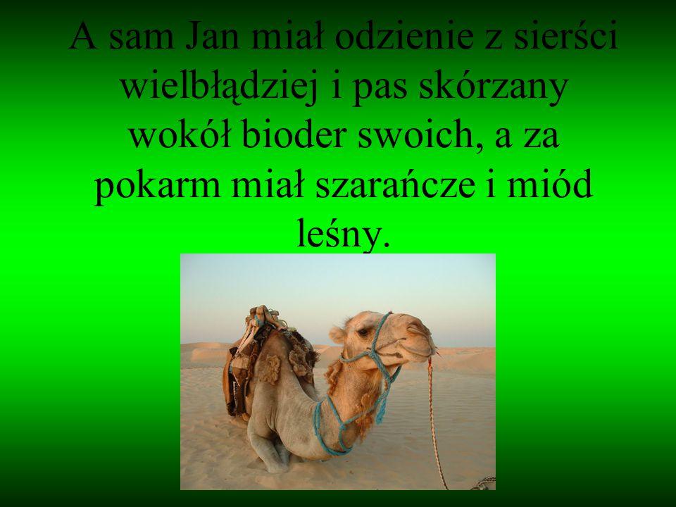 A sam Jan miał odzienie z sierści wielbłądziej i pas skórzany wokół bioder swoich, a za pokarm miał szarańcze i miód leśny.