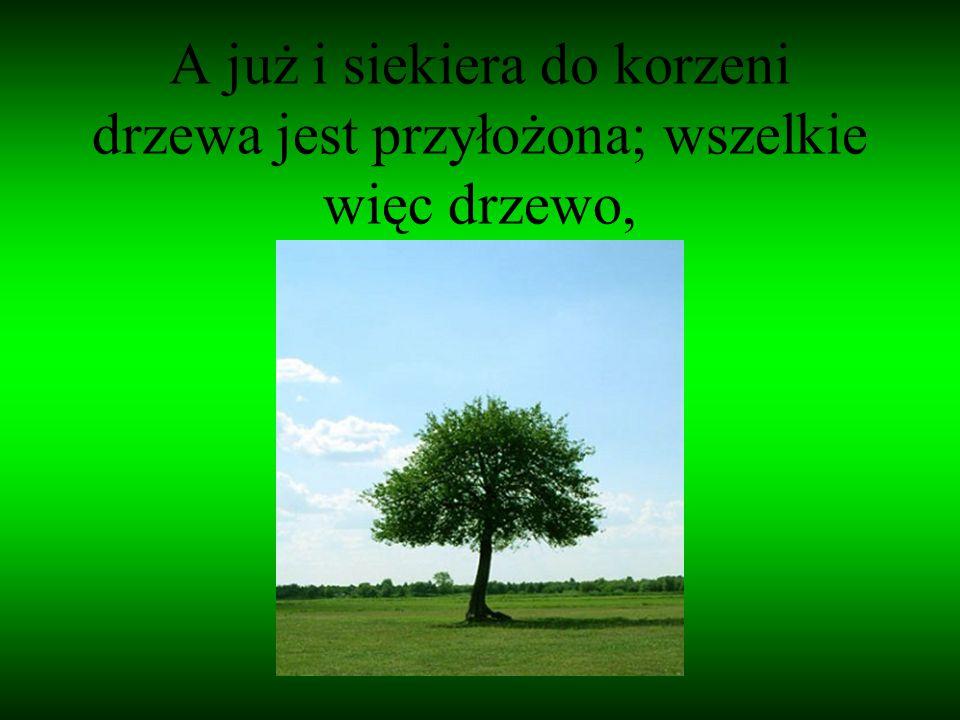 A już i siekiera do korzeni drzewa jest przyłożona; wszelkie więc drzewo,