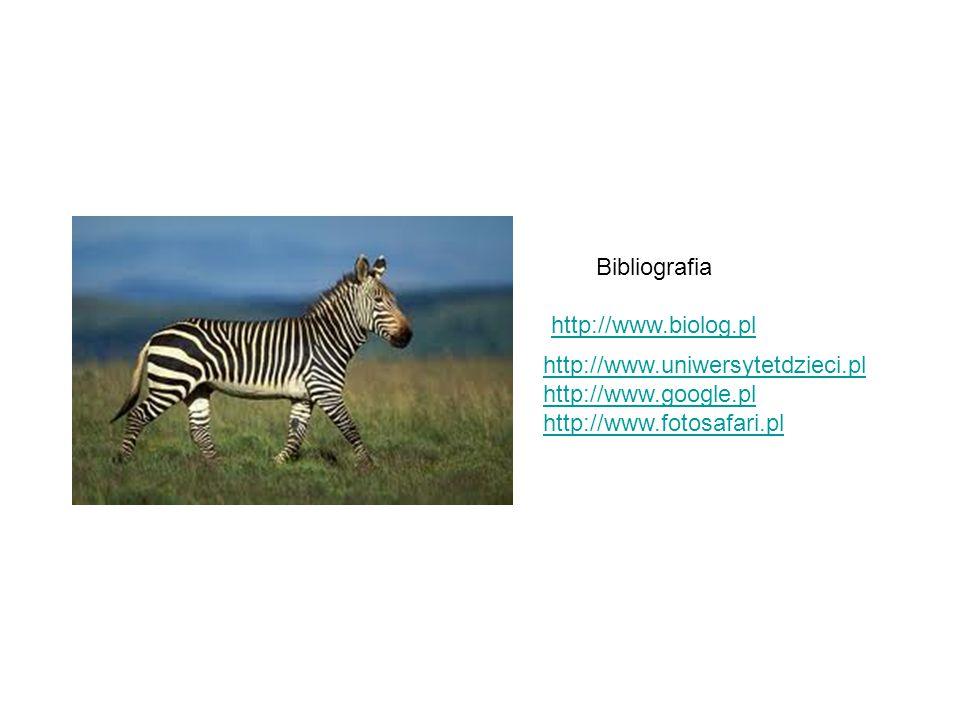 Bibliografia http://www.biolog.pl http://www.uniwersytetdzieci.pl http://www.google.pl http://www.fotosafari.pl