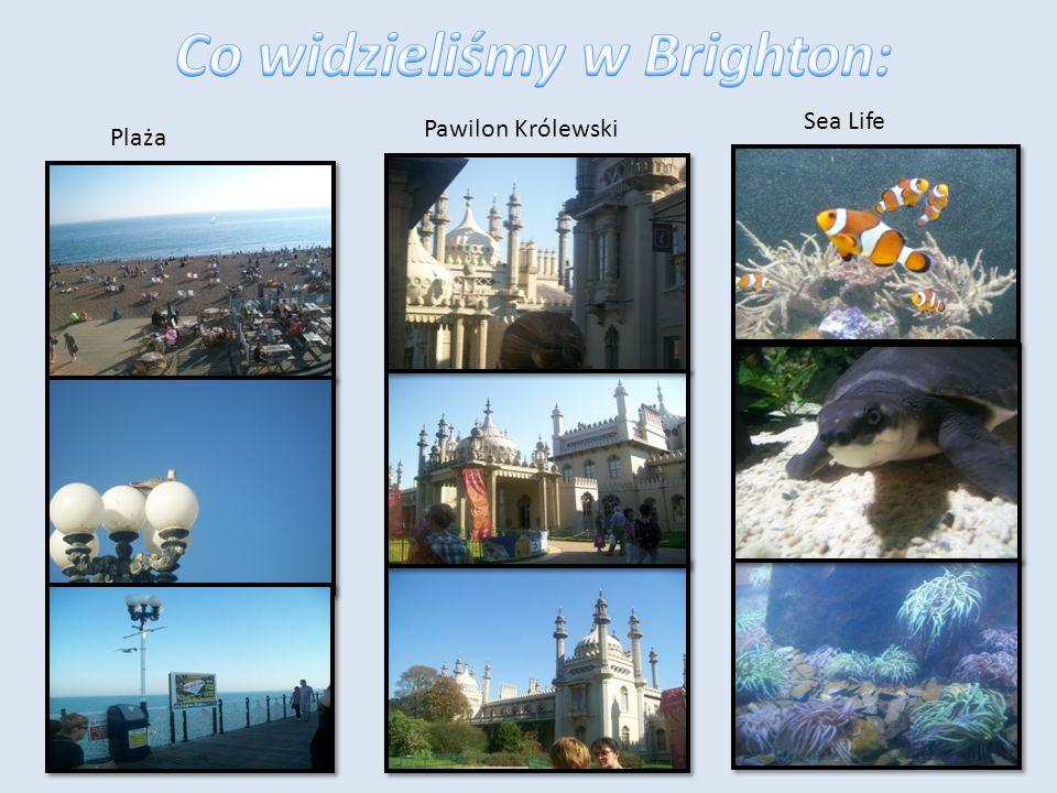 Brighton Brighton – miasto w Wielkiej Brytanii, w Anglii, nad Kanałem La Manche.