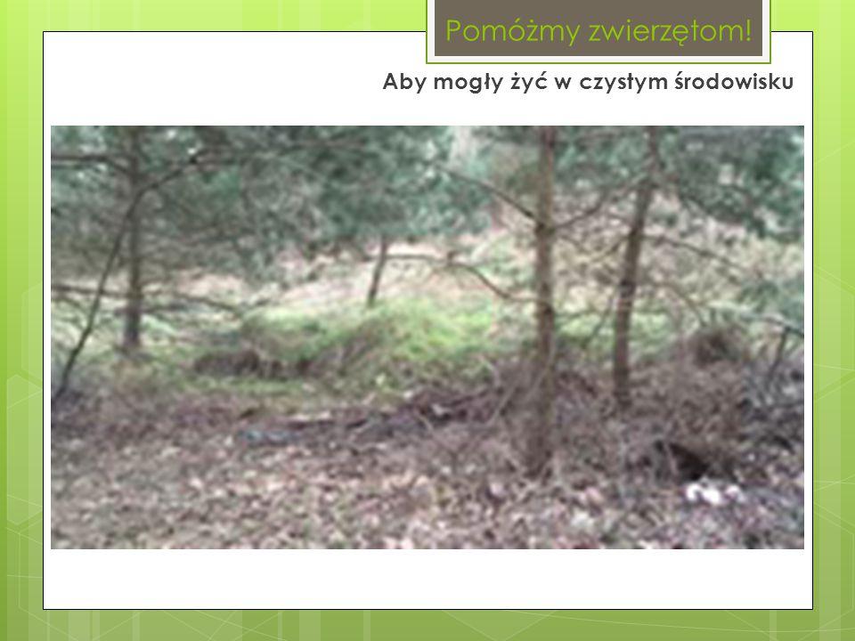 Wchodząc do lasu, spotykamy gromady śmieci. Dlatego odwiedzając las, zostaw po sobie porządek.