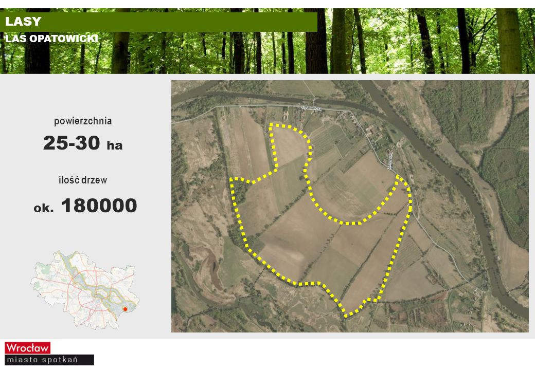 LAS OPATOWICKI ilość drzew ok. 180000 powierzchnia 25-30 ha