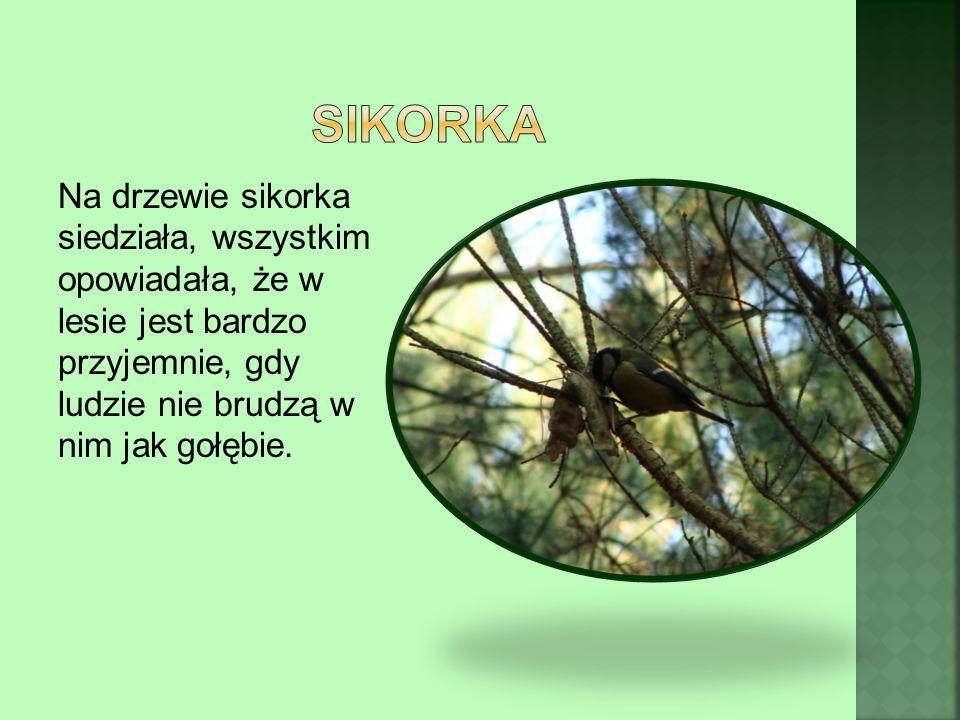 Na drzewie sikorka siedziała, wszystkim opowiadała, że w lesie jest bardzo przyjemnie, gdy ludzie nie brudzą w nim jak gołębie.