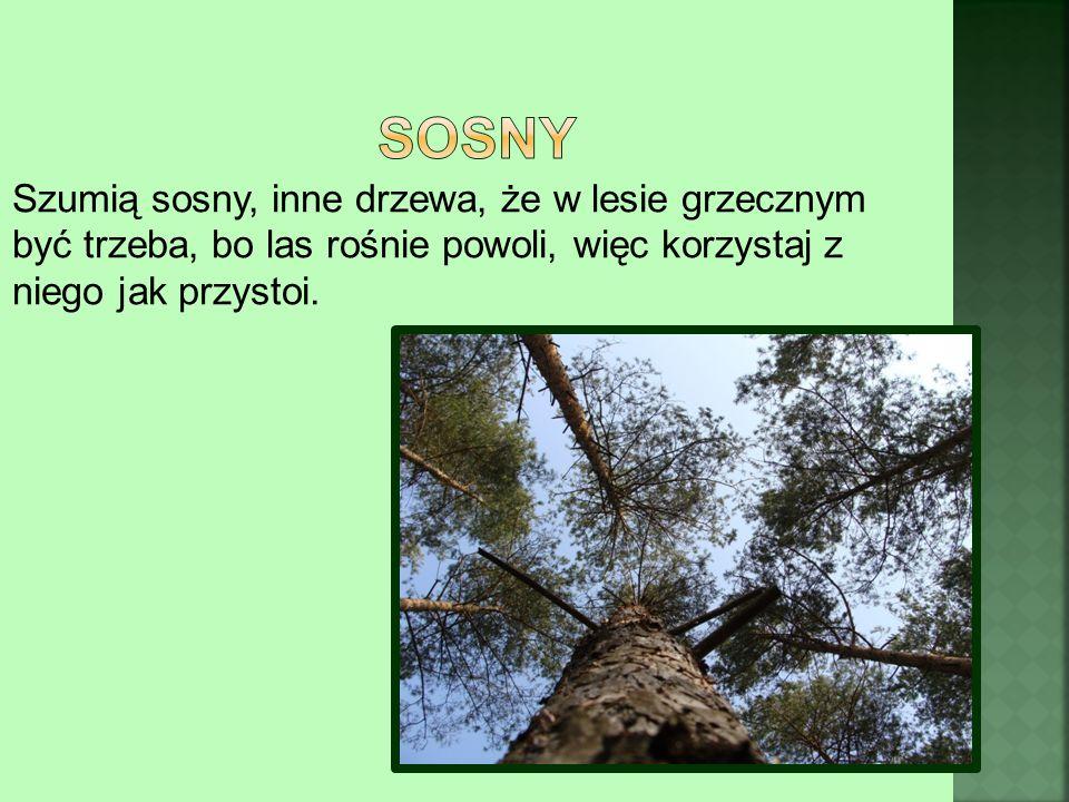 Szumią sosny, inne drzewa, że w lesie grzecznym być trzeba, bo las rośnie powoli, więc korzystaj z niego jak przystoi.