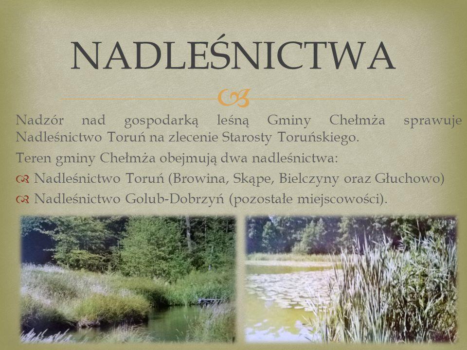  Nadzór nad gospodarką leśną Gminy Chełmża sprawuje Nadleśnictwo Toruń na zlecenie Starosty Toruńskiego.