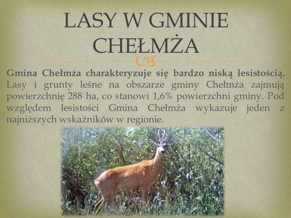  Gmina Chełmża charakteryzuje się bardzo niską lesistością.