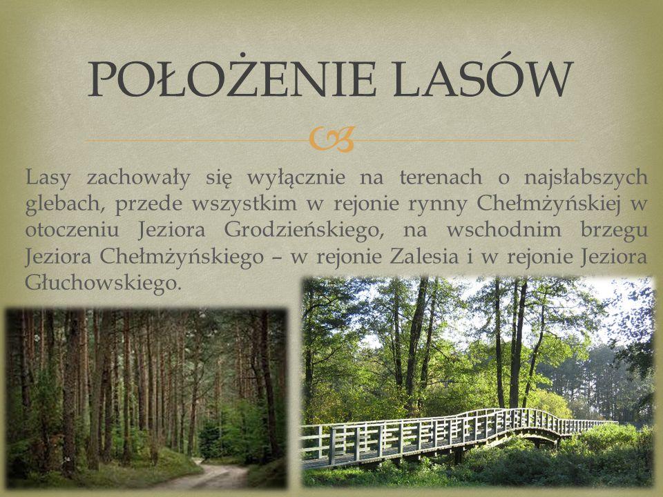  Lasy zachowały się wyłącznie na terenach o najsłabszych glebach, przede wszystkim w rejonie rynny Chełmżyńskiej w otoczeniu Jeziora Grodzieńskiego, na wschodnim brzegu Jeziora Chełmżyńskiego – w rejonie Zalesia i w rejonie Jeziora Głuchowskiego.