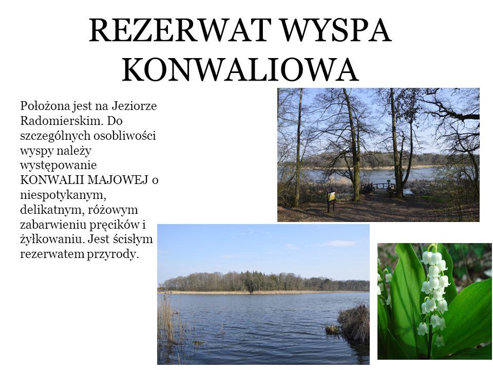 REZERWAT WYSPA KONWALIOWA Położona jest na Jeziorze Radomierskim. Do szczególnych osobliwości wyspy należy występowanie KONWALII MAJOWEJ o niespotykan