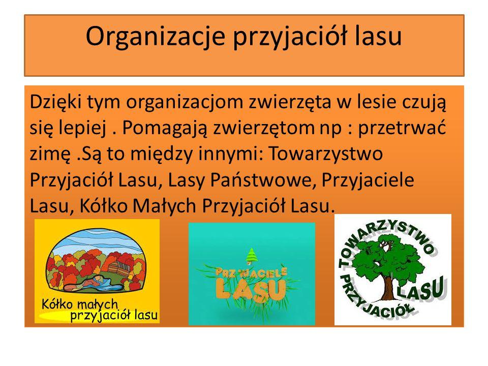 Lis Lisy to przyjaciele lasu,ponieważ są naturalnymi czyścicielami tego miejsca.