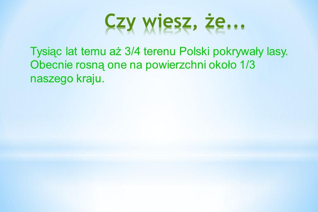 Tysiąc lat temu aż 3/4 terenu Polski pokrywały lasy. Obecnie rosną one na powierzchni około 1/3 naszego kraju.