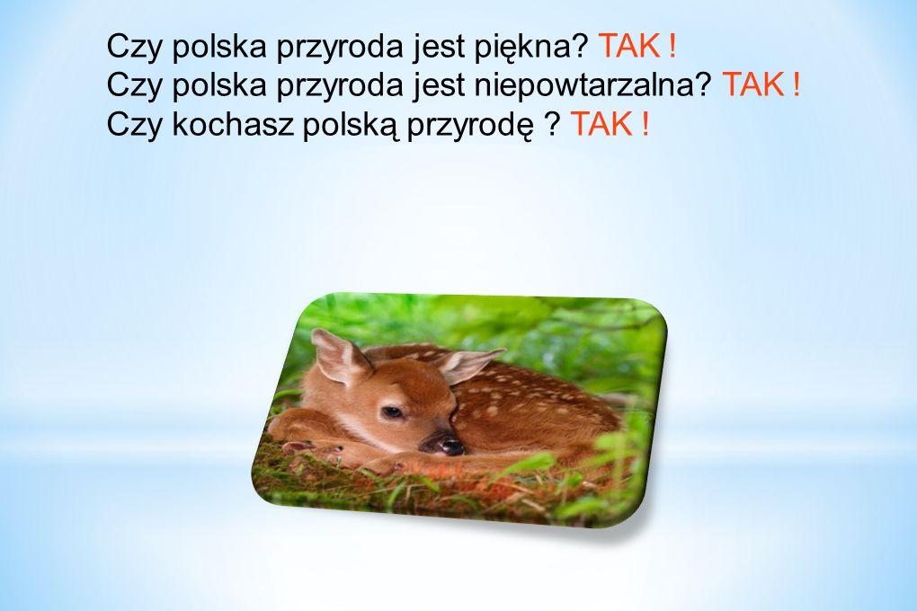 Czy polska przyroda jest piękna? TAK ! Czy polska przyroda jest niepowtarzalna? TAK ! Czy kochasz polską przyrodę ? TAK !