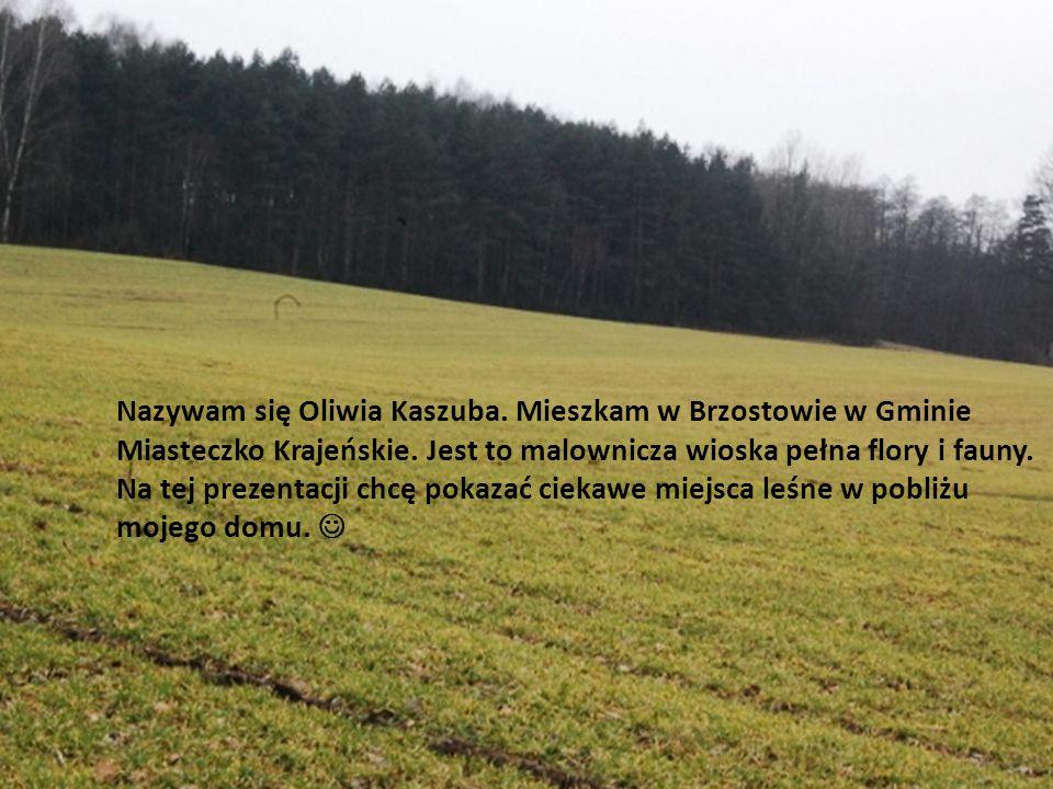 Nazywam się Oliwia Kaszuba. Mieszkam w Brzostowie w Gminie Miasteczko Krajeńskie. Jest to malownicza wioska pełna flory i fauny. Na tej prezentacji ch