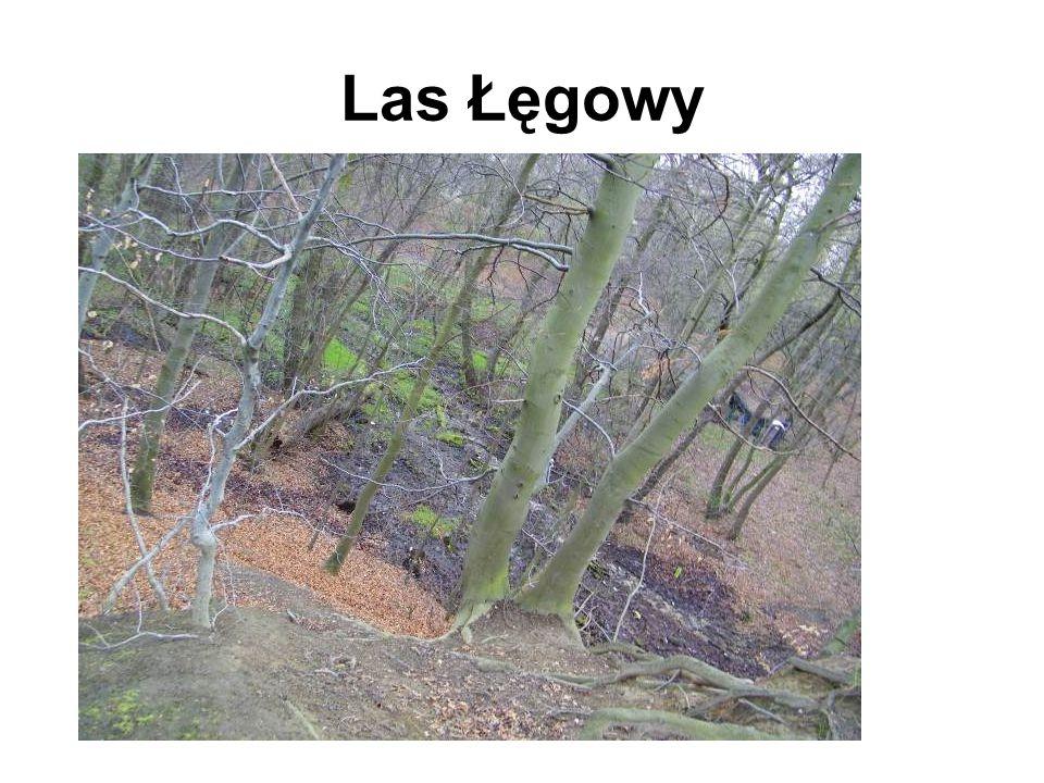 Las Łęgowy