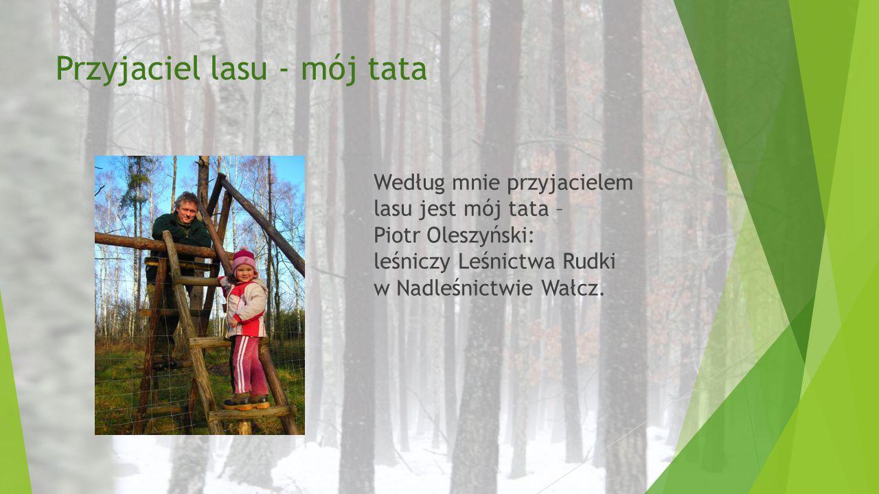 Przyjaciel lasu - mój tata Według mnie przyjacielem lasu jest mój tata – Piotr Oleszyński: leśniczy Leśnictwa Rudki w Nadleśnictwie Wałcz.