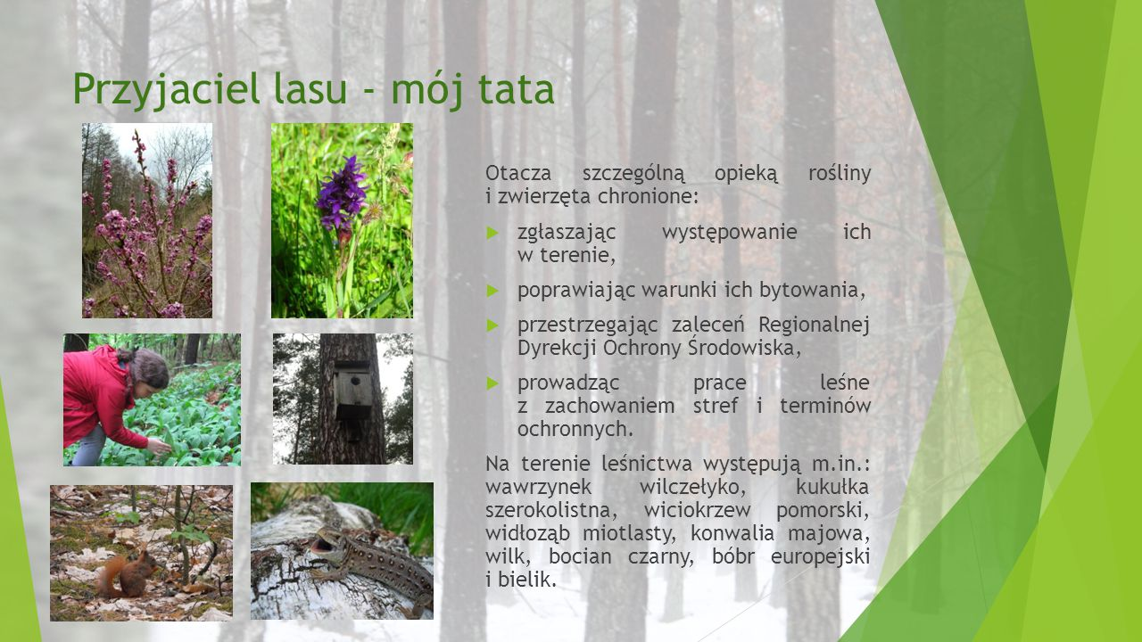 Przyjaciel lasu - mój tata Otacza szczególną opieką rośliny i zwierzęta chronione:  zgłaszając występowanie ich w terenie,  poprawiając warunki ich