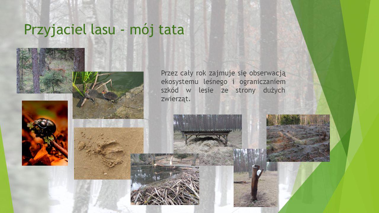 Przyjaciel lasu - mój tata Przez cały rok zajmuje się obserwacją ekosystemu leśnego i ograniczaniem szkód w lesie ze strony dużych zwierząt.